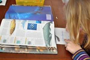vyrábame knihu o veľrybách