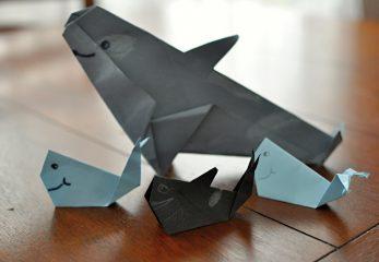 Je kosatka veľryba alebo delfìn?