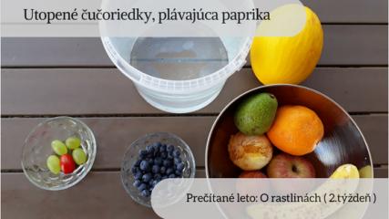 plody ovocia zeleniny
