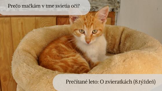 Prečo mačkám v tme svietia oči? Prečítané leto: O zvieratkách (8. týždeň)