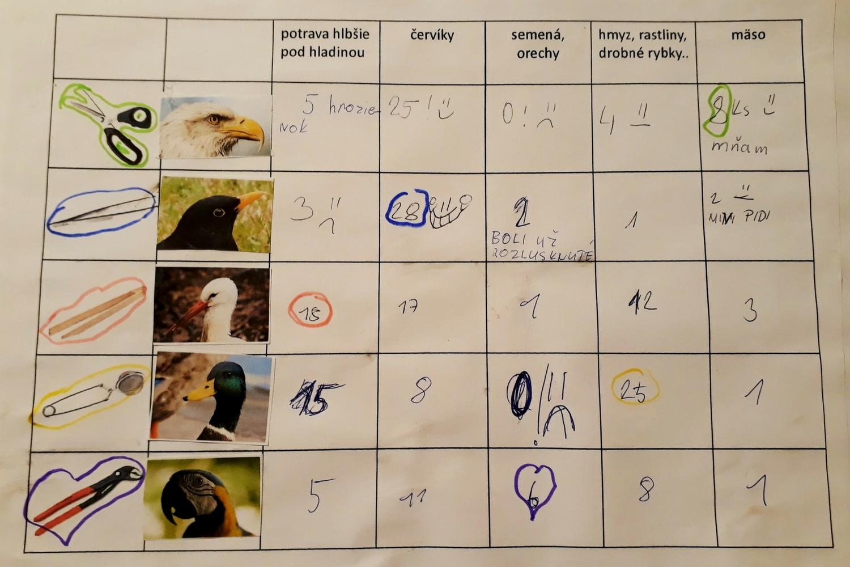 Prečo majú vtáky rôzne zobáky?