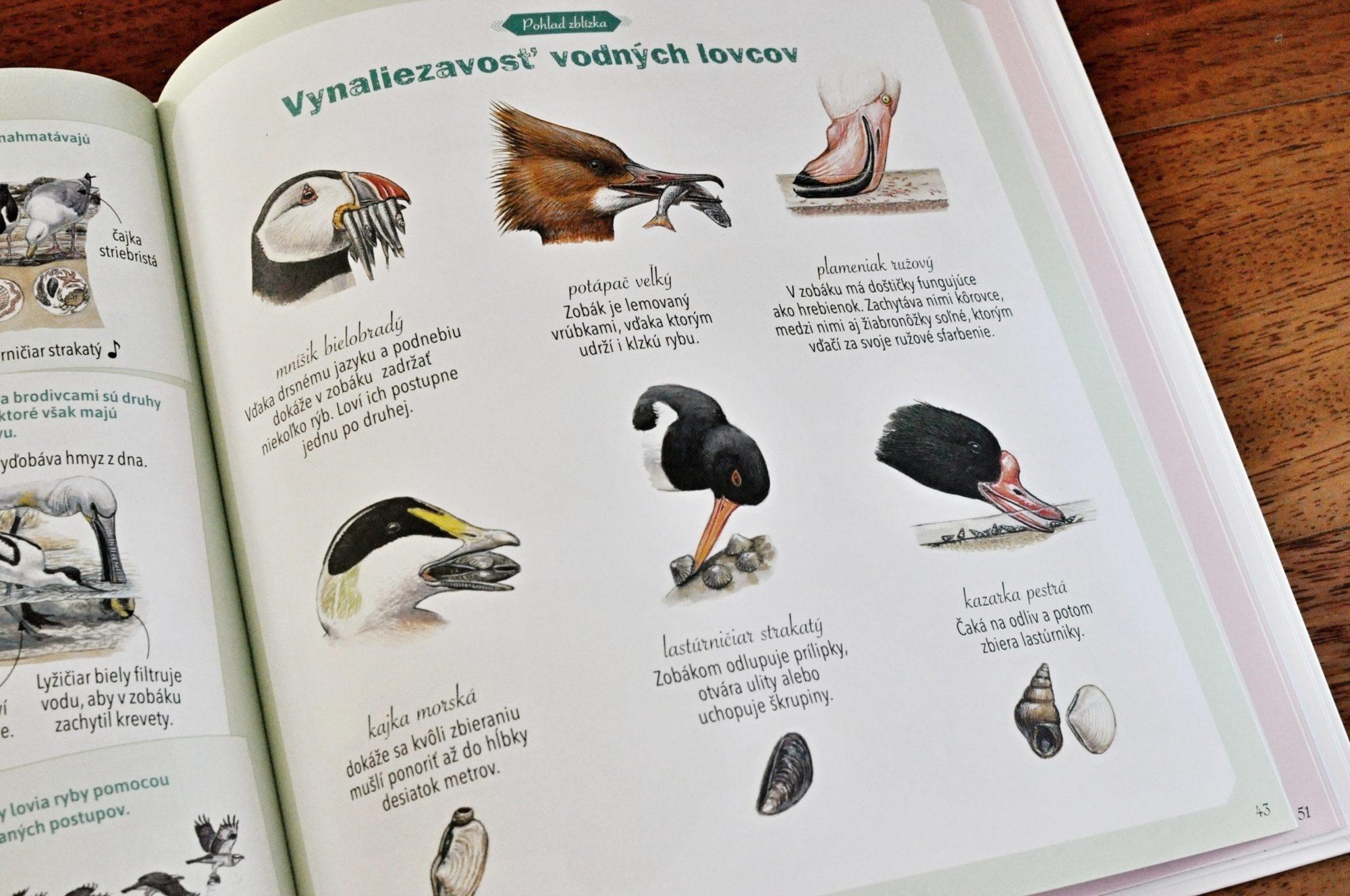 tesné mláďatá veľké vtáky môj kreslený sex hry